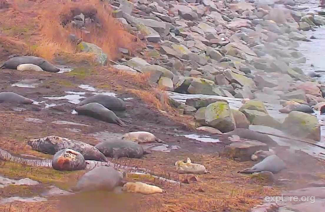 Seal Island LIVE cam., Maine USA