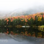 Beaver Pond Foliage in New Hampshire foliage