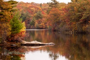 Birch Pond in Saugus MA reflecting peak fall color. the print is made up of soft autumn colors.