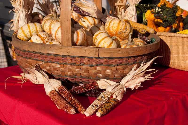basket of ornamental gords fall festivals harvest bounty