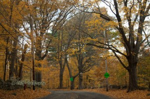 road through fading fall foliage in peabody MA
