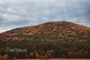 Good foliage view of hill side in Vermont