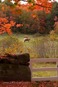 Horses in paddock with autumn's colors of orange and red covering the scene