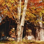 Vermont barn amid fall's colorful foliage on a sunny day