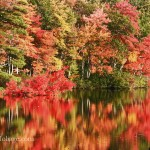 Lake Chocorua in New Hampshire with red maple laying on the water reflecting it's color