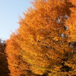 Fall foliage in Salem on a late afternoon