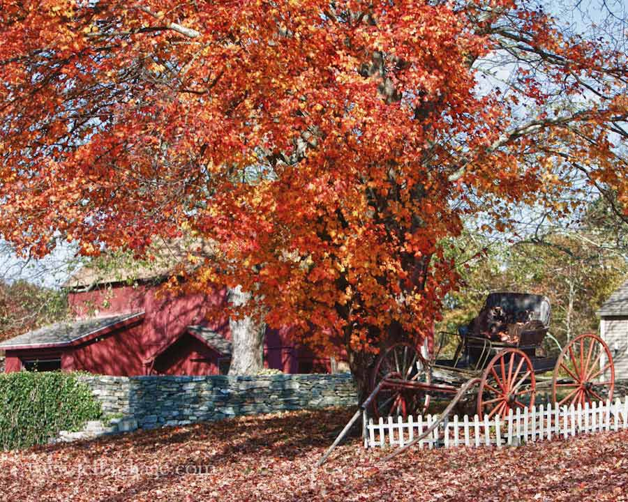 Fall Gallery Connecticut New England Fall Foliage