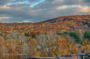 fall foliage on a hillside creating a tapestry of past peak color