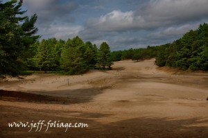 The desert of Maine with pine trees in groupings holding the sand in place.