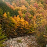 #Vistaphotography #JeffFolger, #JeffFoliage, 9 Oct 2009 along the Mohawk trail and you can see the color is much better