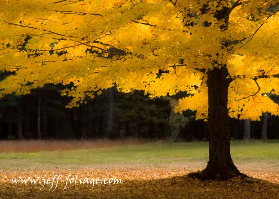 Tips to improve your fall foliage -After fixing some exposure issues the golden morning light was more the way I remember should should the