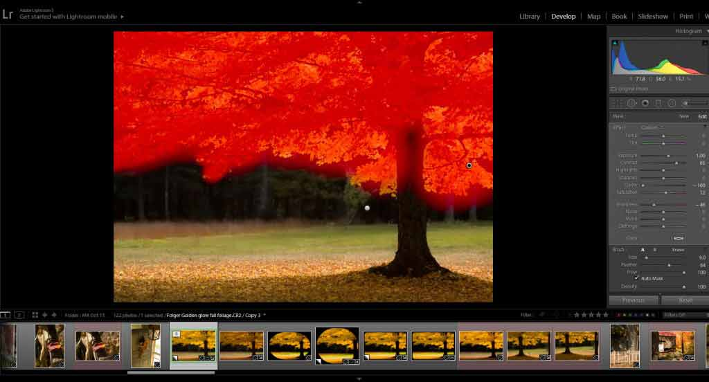 Working in lightroom to improve your fall foliage