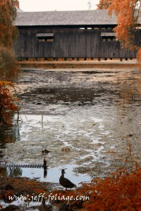 Covered bridge at Shelburne museum with ducks underneath it in the water