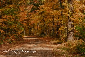 The road not taken through fall foliage