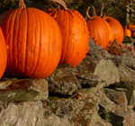 banner of New England fall foliage with pumpkins in a row on a rustic stone wall which gives New England its quintessential home like feel