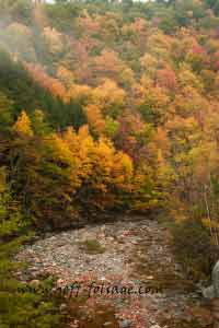 The massachusetts fall colors just climb the hills on either side of the Mohawk Trail