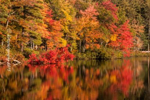 Chocorua pond with fall colors in digital contest