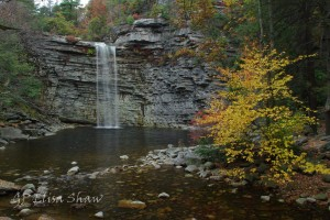 Fall colors around water fall in New York