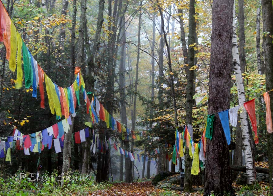 new woodstock buddhist singles It follows the trungram tradition of the kagyu school of vajrayana buddhism contact: (usa/new ltd, woodstock, ny dharma centers and organizations in new.