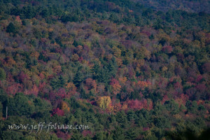 The colors are running late this year. Normally the New England fall foliage is much earlier