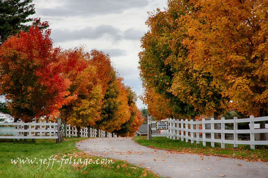 Rows of colorful maples