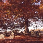 oak fall colors in cemetery