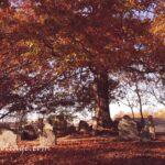 oak fall colors in cemetery