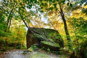 Living tree in fall foliage colors out of a solid rock