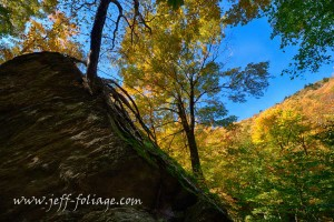Blue sky above yellow Vermont fall foliage in Smuggler's Notch