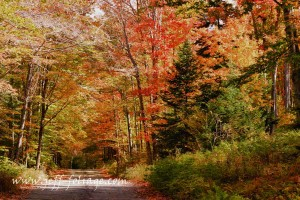 Roadside fall colors line both side of the road.