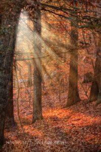sun streaks in on the walking path
