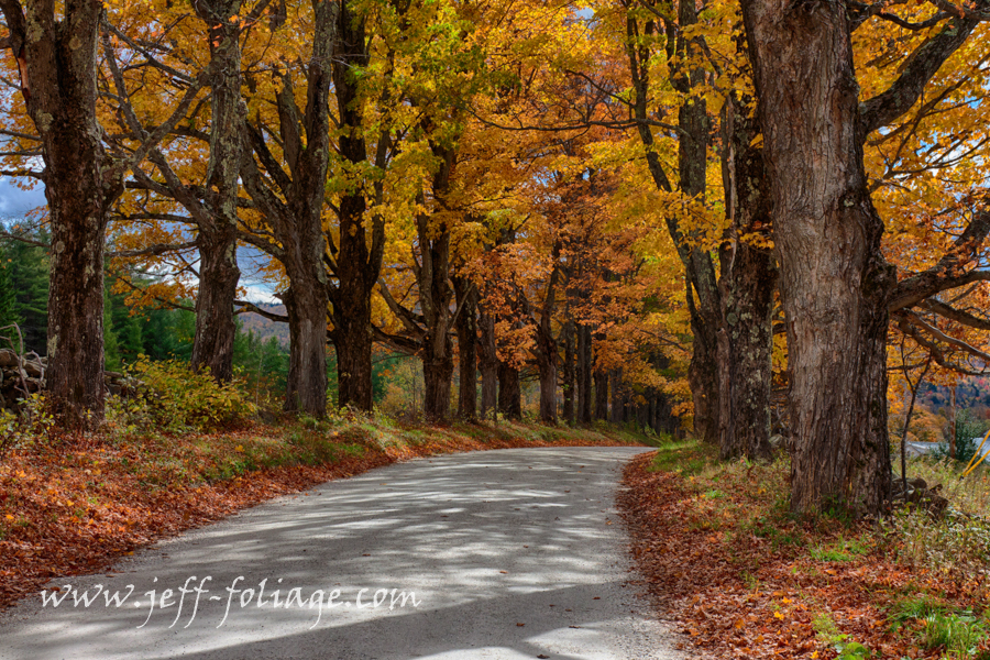 Belmont Vermont maple tree lined road