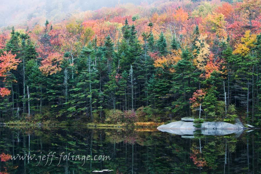 Foggy foliage morning