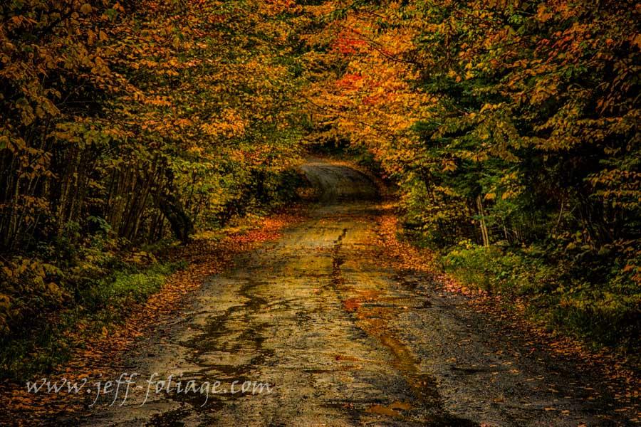 wet dirt road fall foliage reflections