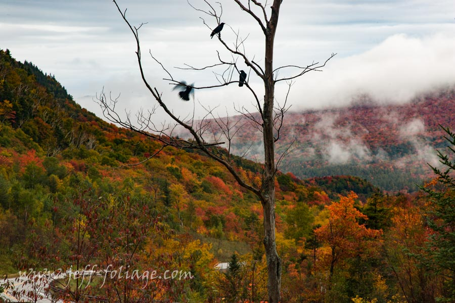 Sugar hill dressed in red fall foliage