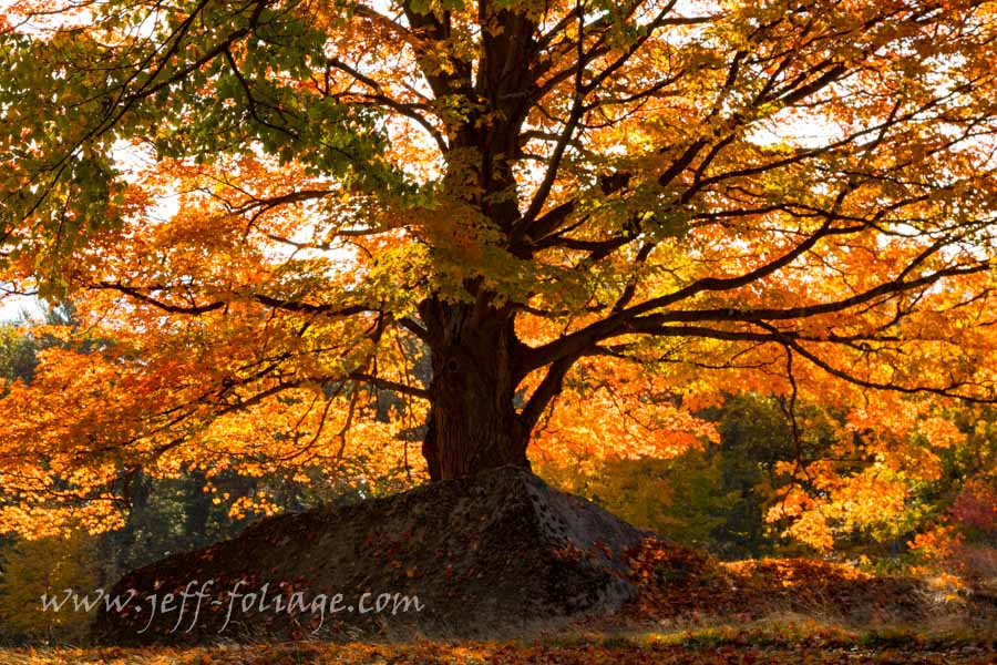 Rock and a hard place under fall foliage