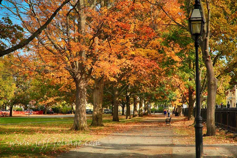 Fall foliage on Salem Common