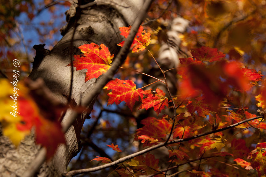 New England photography created with simple sunlight and autumns fall colors